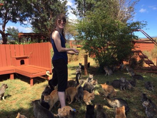 Lanai City, Hawái: Kitties waiting for treats