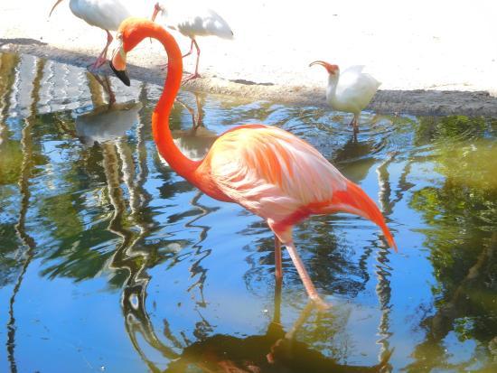 Davie, Floryda: Flamingo