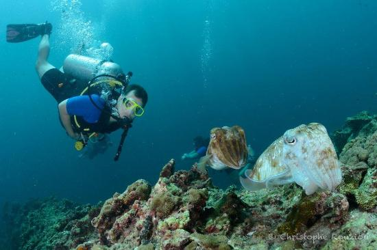 Aowd With Palm Beach Divers Great Dive