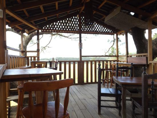 Playa San Miguel, Kosta Rika: sull'albero