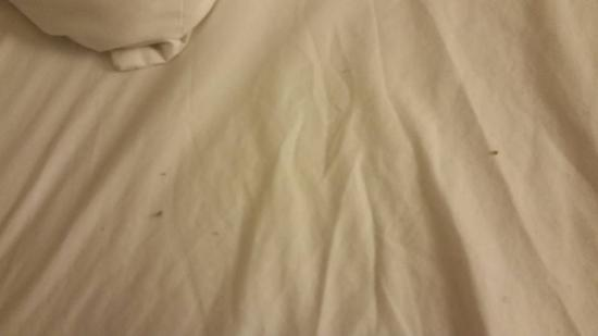 Quality Inn Rochester Airport: Dirt and pubic hairs found under pillows in 2nd room