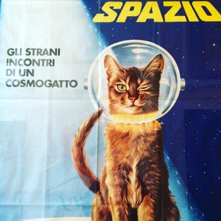 Kattenkabinet: photo0.jpg