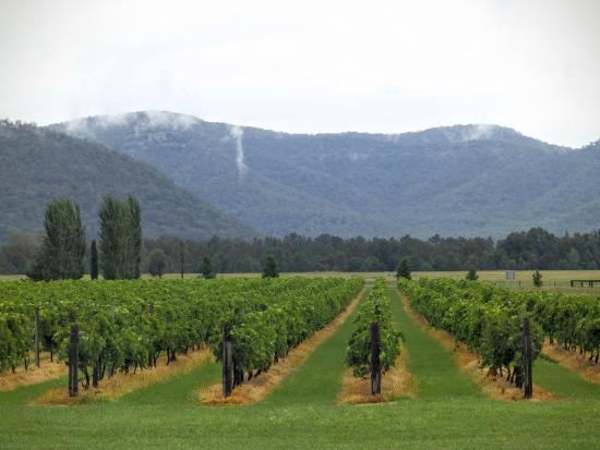 Broke, Avustralya: View from the cellar door
