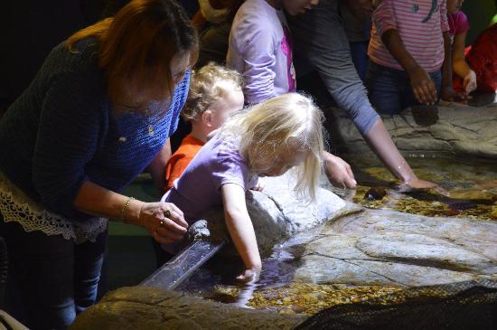 Грейвайн, Техас: They got to touch starfish and other creatures.