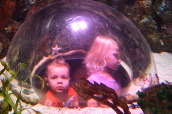 Грейвайн, Техас: The bubbles into the aquarium were a big hit!