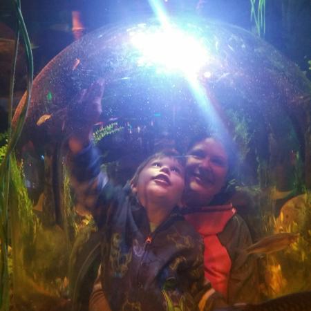 Auburn Hills, MI: SEA LIFE Michigan Aquarium