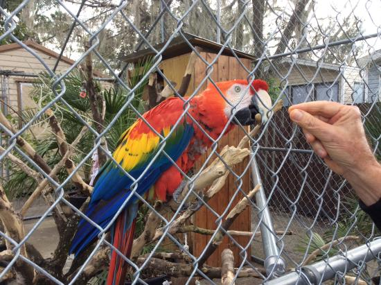 Oviedo, Floryda: The parrots love peanuts