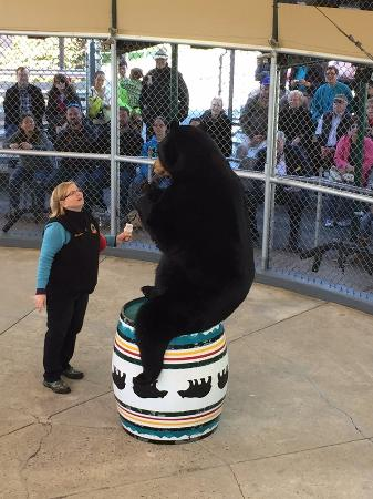 Lincoln, NH: Great Bear Show