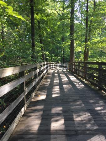 Charlottesville, VA: Wooden bridge on Saunders-Monticello trail