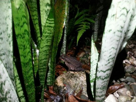 Esquinas Rainforest Lodge: IMG-20160208-WA0015_large.jpg