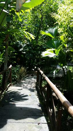 Esquinas Rainforest Lodge: 20160205_121247_large.jpg