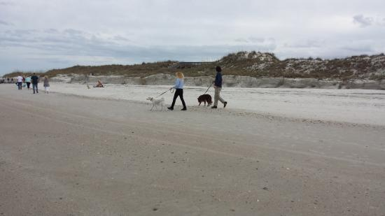 New Smyrna Beach, Φλόριντα: Pet friendly beach