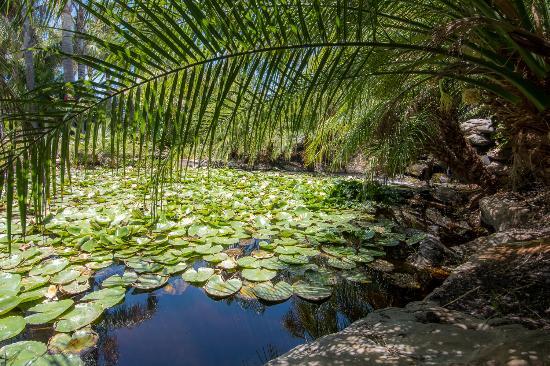 Strathalbyn, Australië: tranquil pond setting