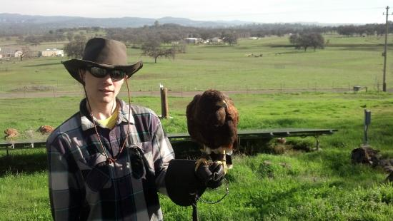Marysville, CA: Son with Harris Hawk
