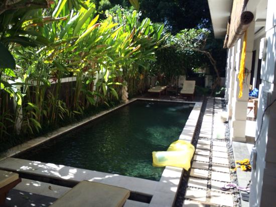 van mandri guesthouse guest house reviews bali kerobokan rh tripadvisor com