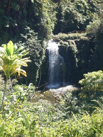 Honomu, Hawaï: No Name Falls