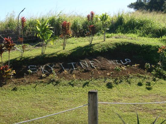 Honomu, Hawaï: Skyline Artwork