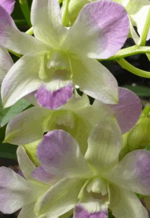 Phipps Conservatory: Orchids at Phipps