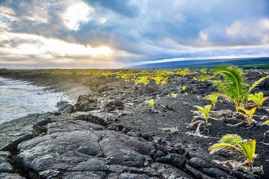 Pahoa, Hawaï : New land Pu'u 'O'o in background