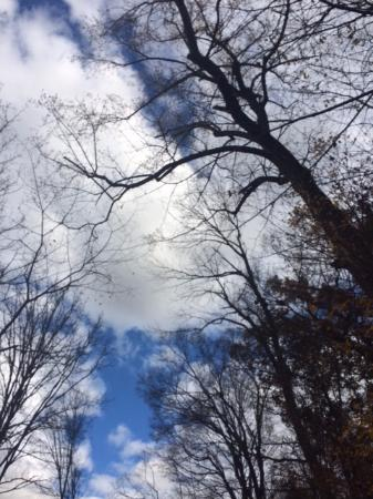 Johnson City, TN: Winter sky with bare trees