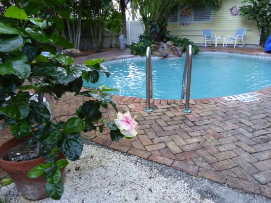 Angelina Guest House: Dined around pool