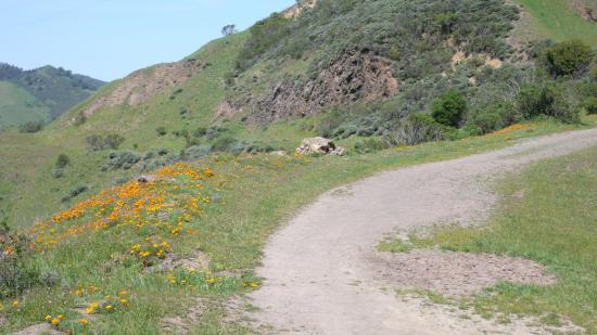 Oakland, كاليفورنيا: Trail at Sibley