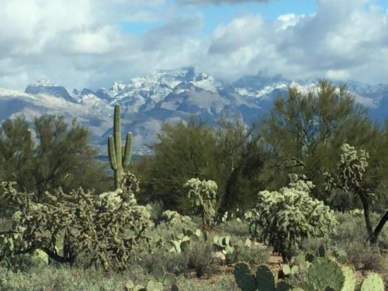 photo0jpg Picture of Arizona Sonora Desert Museum