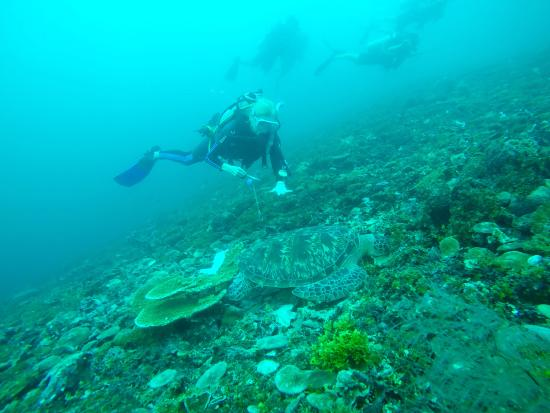 Gili Air, Indonesia: Advanced Open Water student at Turtle Heaven dive site