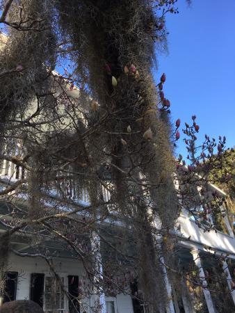 The Rhett House Inn: Spanish Moss outside the Inn