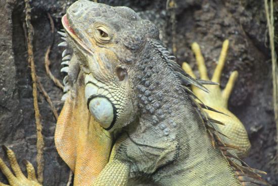 Litchfield Park, AZ: Reptile