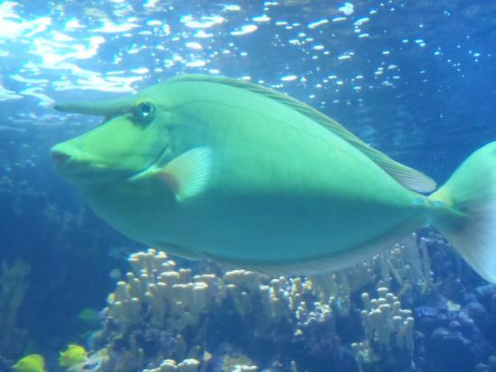 Wailuku, HI: Exotic fish