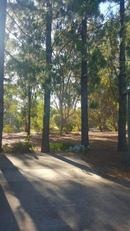 Nuriootpa, Australia: the back of the cabins seems to have a beautiful walking area that you have access to.