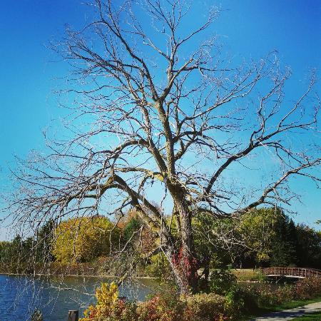 Earl Rowe Provincial Park: IMG_20151012_111431_large.jpg