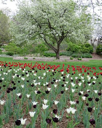 Lombard, IL: Another of many Spring planting in the park.