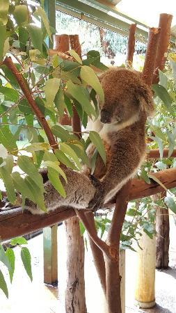 Whiteman, Australia: 20160101_174341_large.jpg