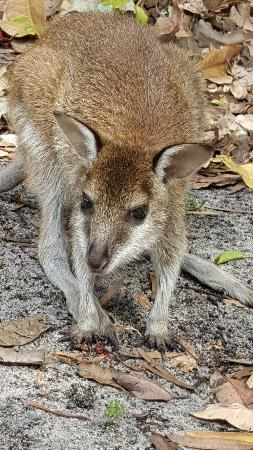 Whiteman, Australia: 20160101_182841_large.jpg