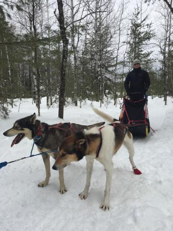 Nature's Kennel Sled Dog Racing and Adventures: photo1.jpg
