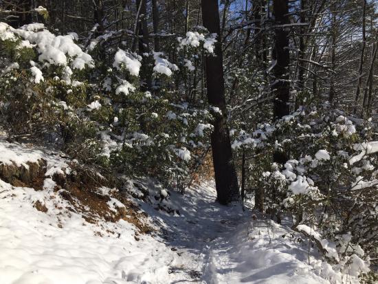 Amherst, MA: Winter wonderland