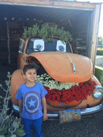 Encinitas, CA: Our kids loved this place and our pocketbooks loved it even more!