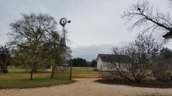 Plains, GA: A view of the windmill as we walked from the house towards the barn.
