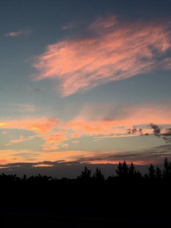 Wakodahatchee Wetlands: photo0.jpg