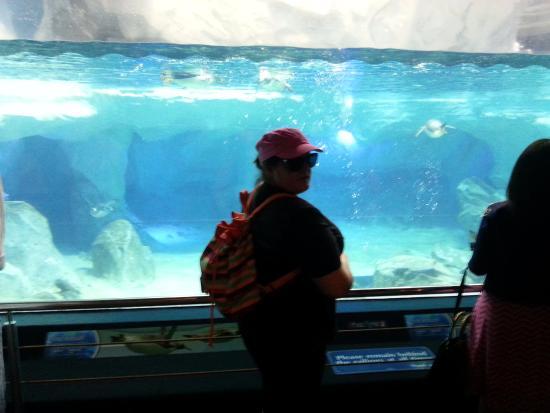 Main Beach, Australia: sea world penguin pool