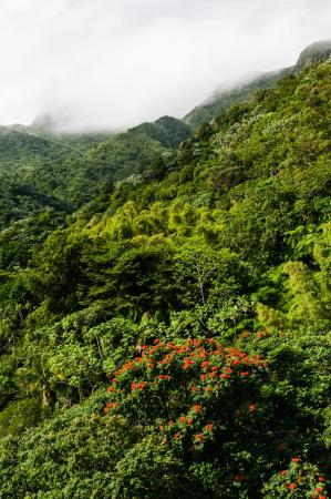 Luquillo Mountain Range: Cloud Forest at Upper Reaches of the Mountains