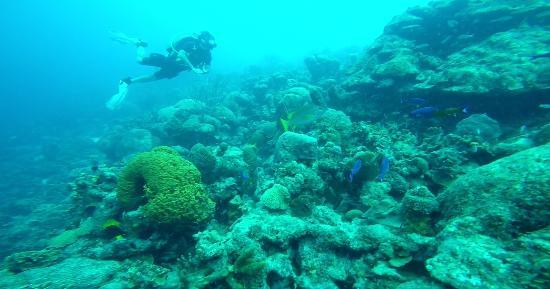 Kralendijk, Bonaire: Bonaire reef.