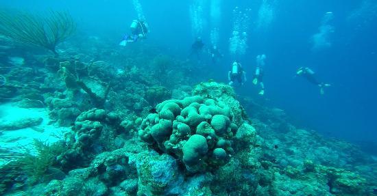 Kralendijk, Bonaire: Reef system.
