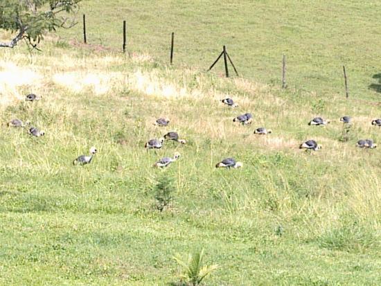 Bwindi Impenetrable National Park, Uganda: The Uganda National birds.