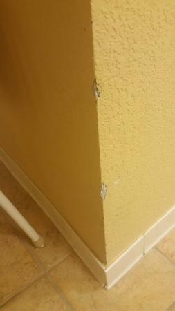 Allure Resort International Drive Orlando: Stained and torn carpets, dark florescent lit bathroom, chipped paint.
