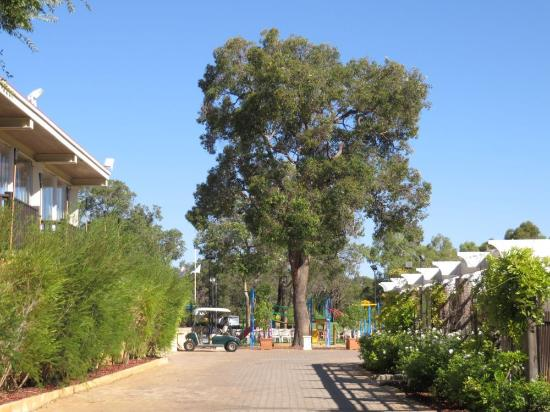 The Vines, أستراليا: View to the golf course