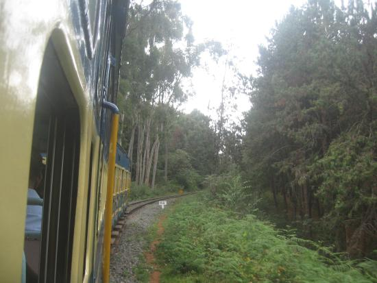 Coonoor, Ινδία: Train view