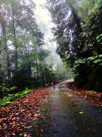 Kubah National Park: FB_IMG_1454996333046_large.jpg